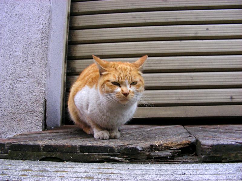 最初に出会った茶白猫と再会1