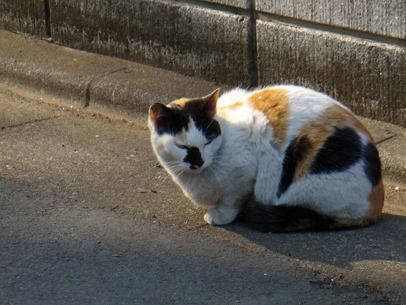 路地で佇む三毛猫2