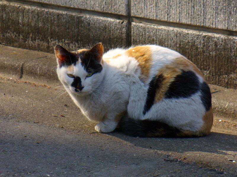 路地で佇む三毛猫3