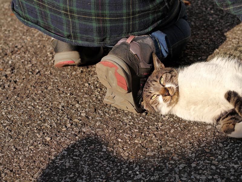 足で暴れるキジ白猫2