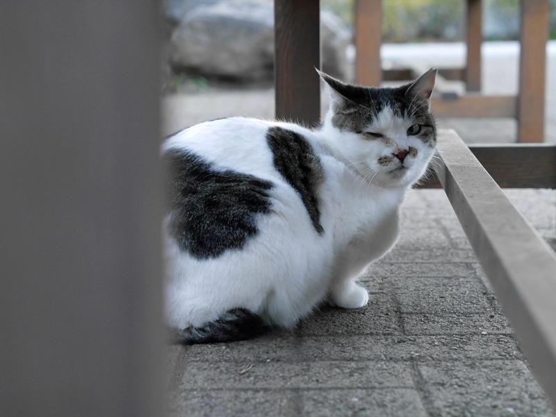 ベンチ下の白キジ猫2