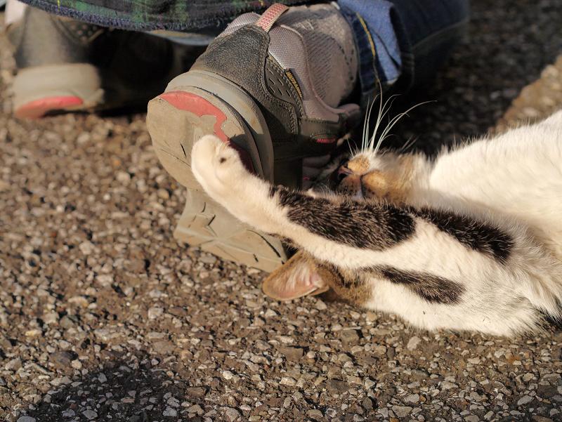 足で暴れるキジ白猫3