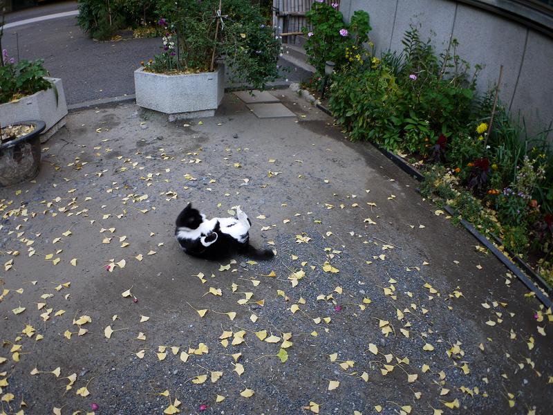 境内で転がってった黒白猫2