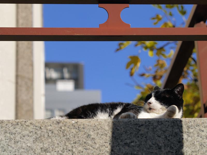 初冬の青空と黒白猫2