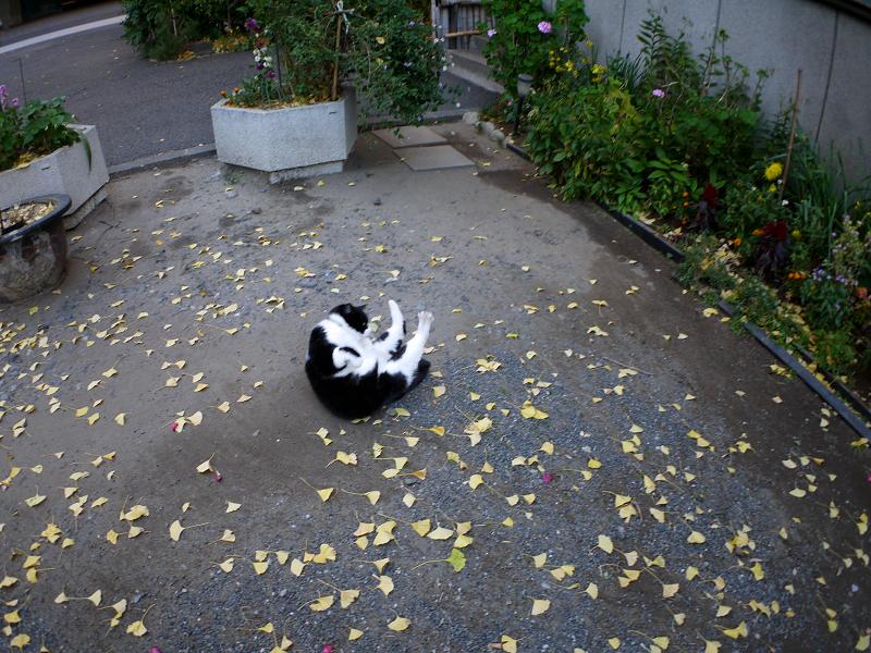境内で転がってった黒白猫3