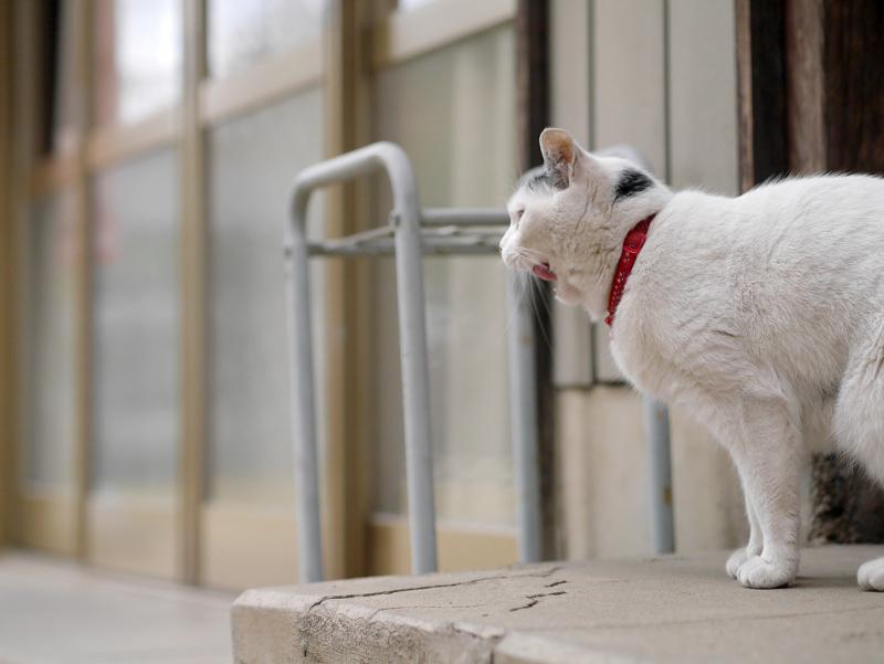 寺務所前の白黒猫1