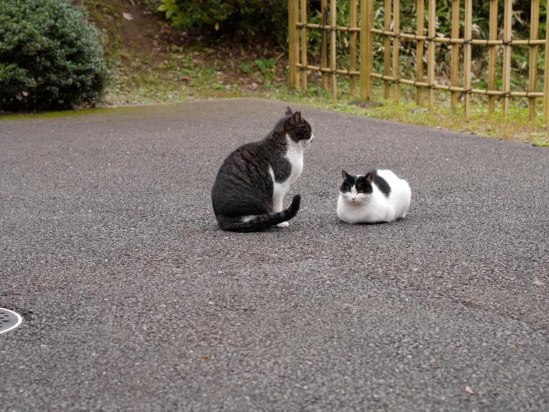 境内の奥の方の猫たち1