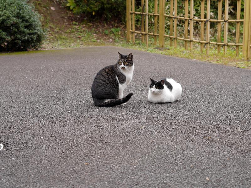 境内の奥の方の猫たち2