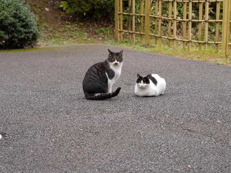 境内の奥の方の猫たち3