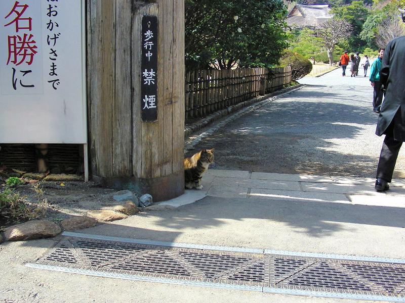 庭園門前のキジ白猫1