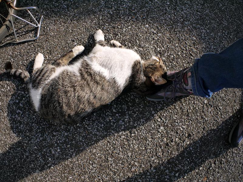 スニーカーとキジ白猫1