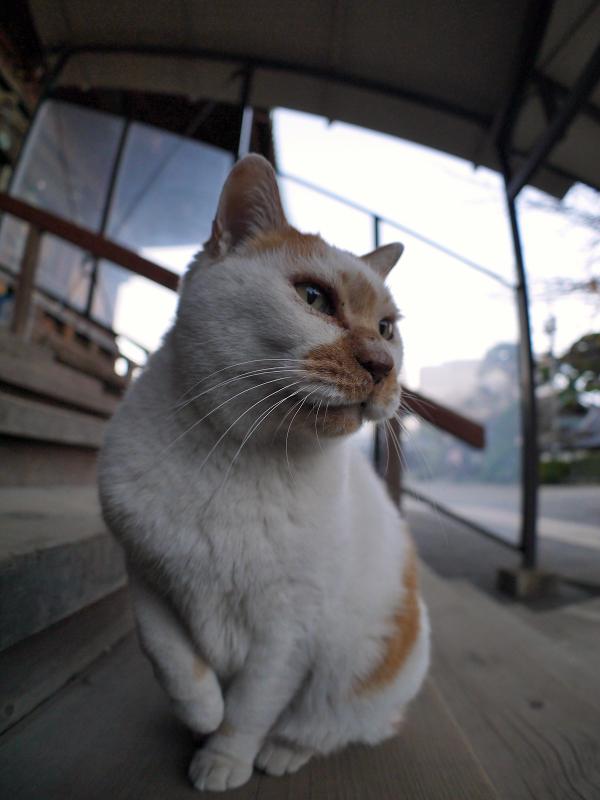 階段で右手を上げてる茶白猫2