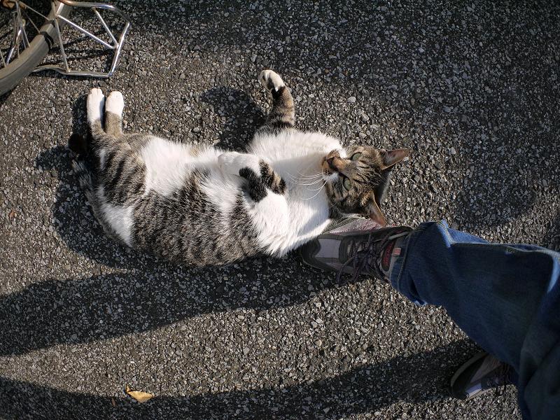 スニーカーとキジ白猫3