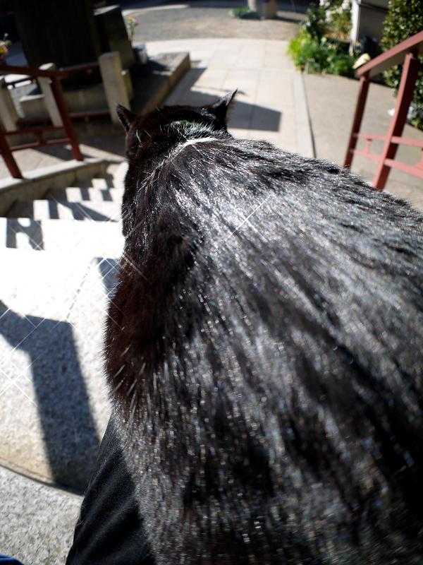 背中が輝いてる黒白猫2