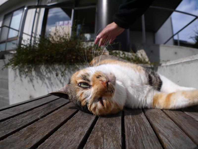 ベンチ仰向け三毛猫1
