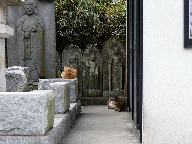 石仏さまと猫たち1