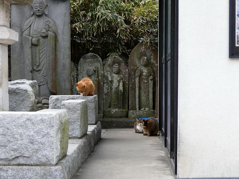 石仏さまと猫たち2