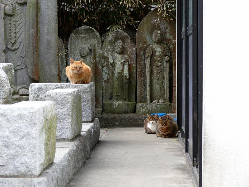 石仏さまと猫たち3