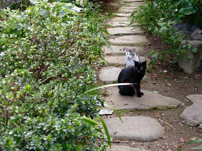 民家庭入り口の猫たち1
