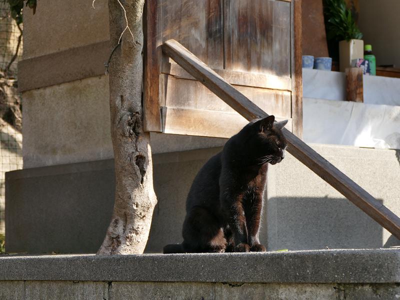 小さな祠と黒猫1