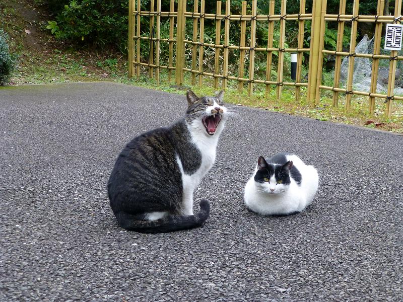 境内仲良し猫2匹1