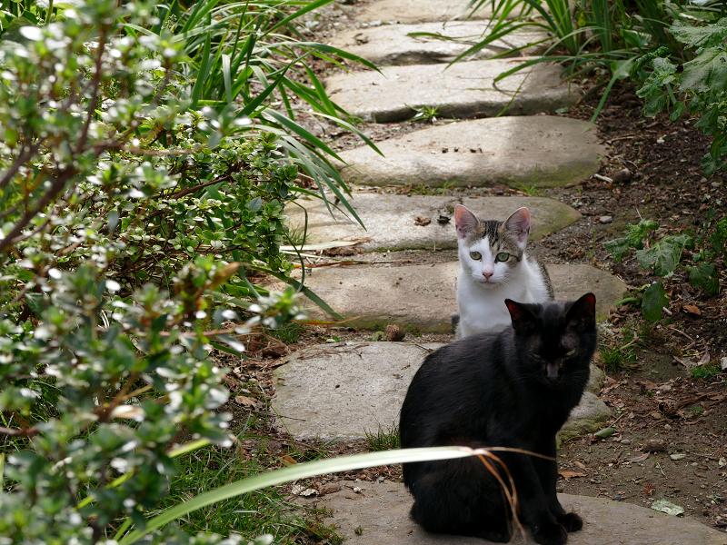 民家庭入り口の猫たち2