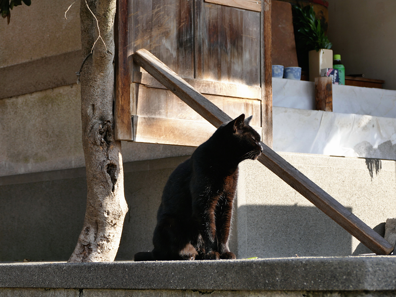 小さな祠と黒猫2