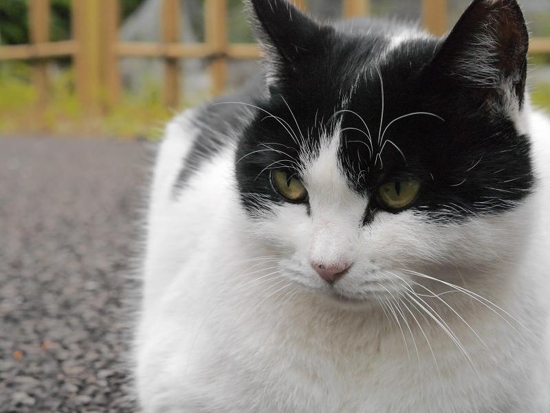境内仲良し猫2匹3