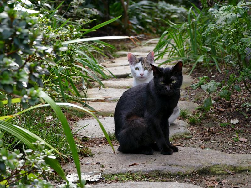 民家庭入り口の猫たち3