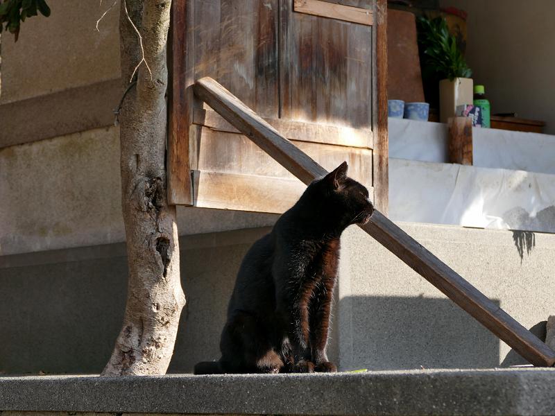 小さな祠と黒猫3