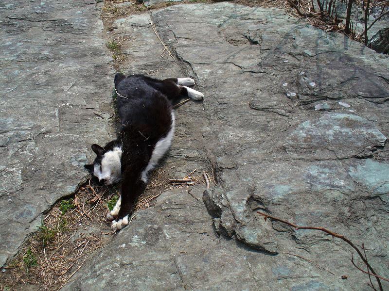 岩場で伸びをする黒白猫1