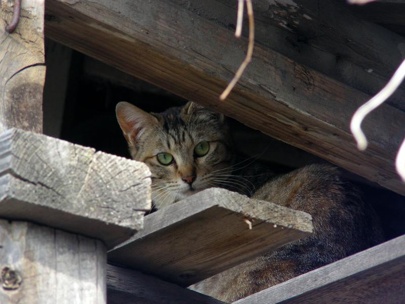 納屋隙間の猫2