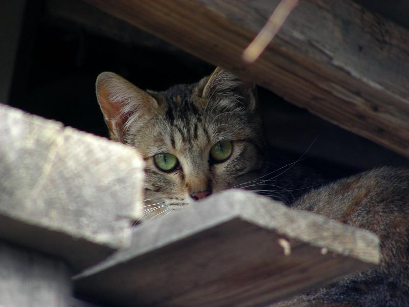 納屋隙間の猫3