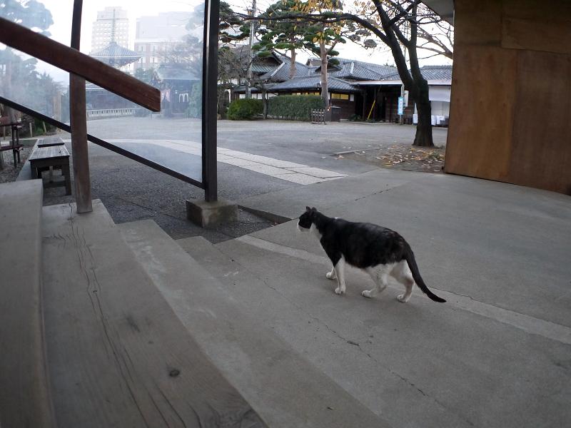 階段近くで鳴く黒白猫1