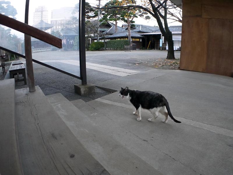 階段近くで鳴く黒白猫2