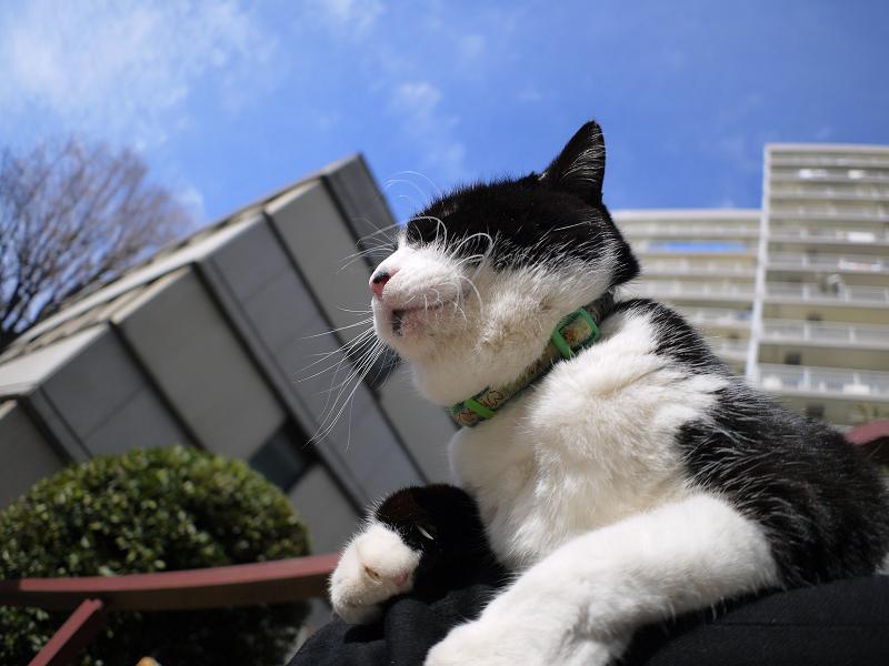 冬の空と黒白猫1