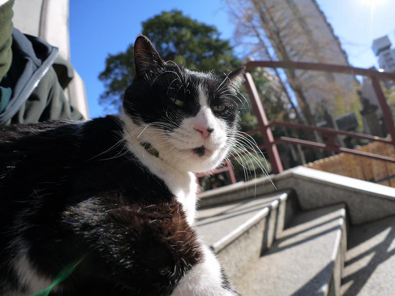 背中にタリーズコーヒーを乗せた黒白猫1