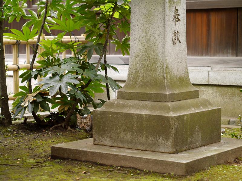 石碑と猫1