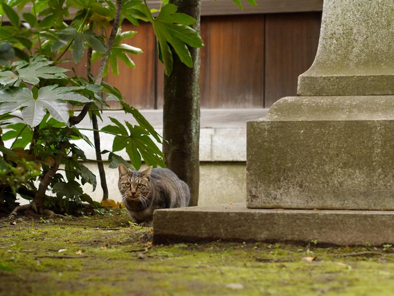 石碑と猫2