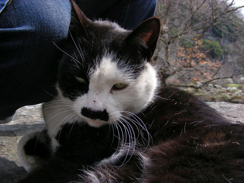 岩場の黒白猫チョビ子1