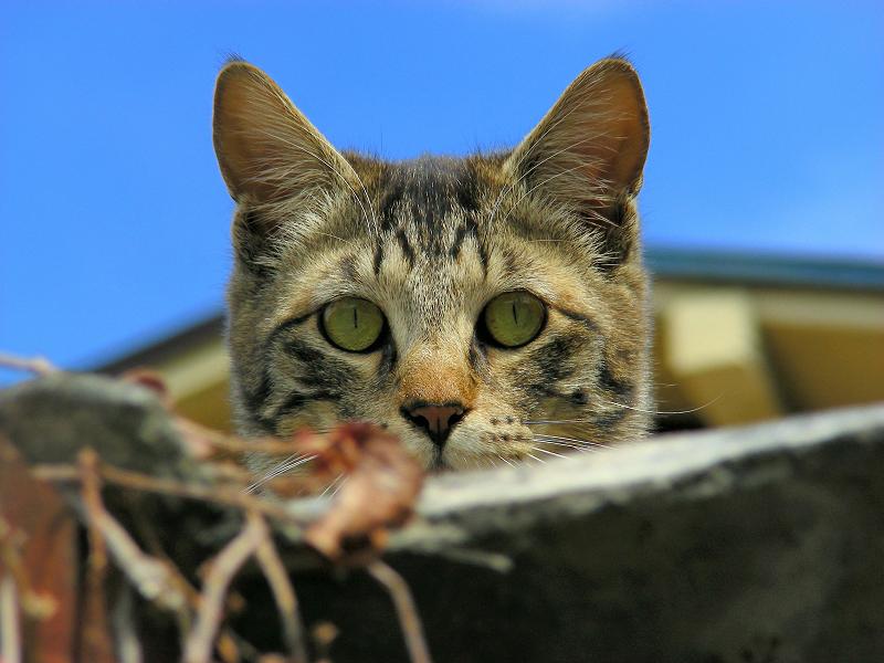 青空バックに見おろす猫3
