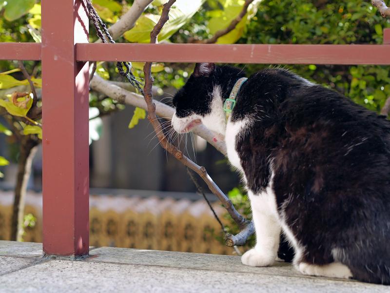横向きでアクビをする黒白猫1