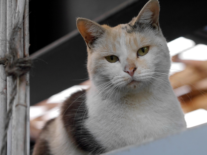 物置の上の三毛猫3