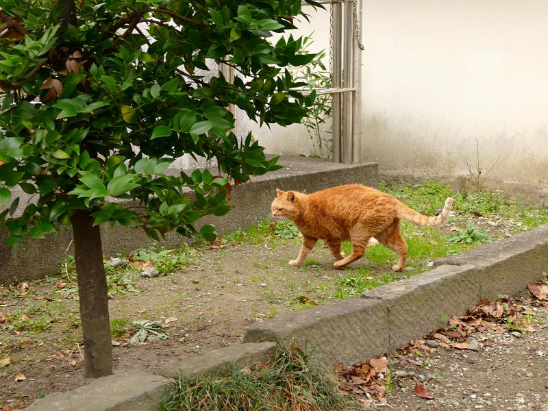 登場した茶トラ猫3
