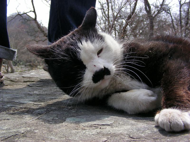 岩場で寛ぐ白黒猫2