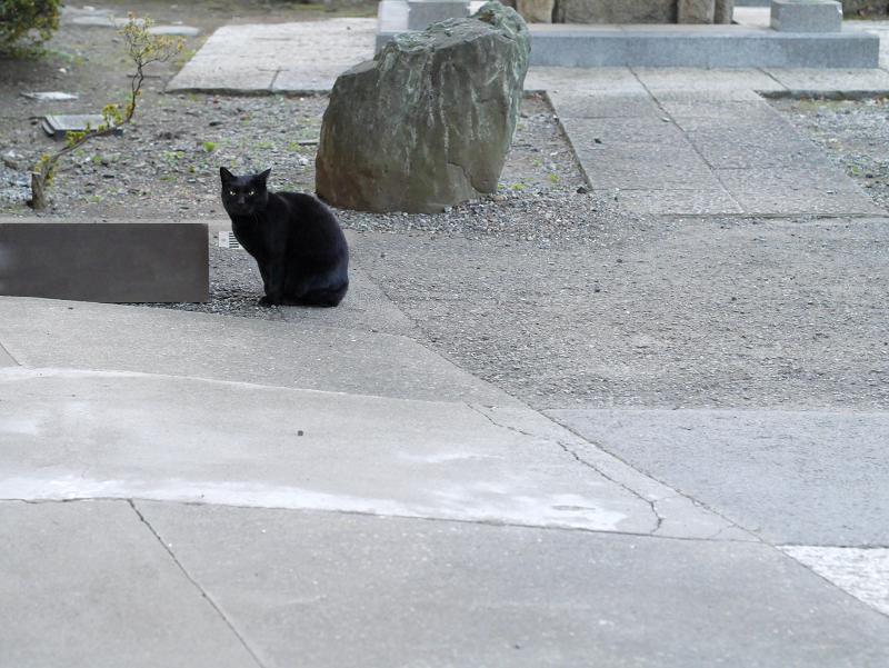 今日も遠くにいた黒猫