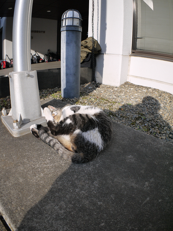 支柱で遊ぶキジ白猫2