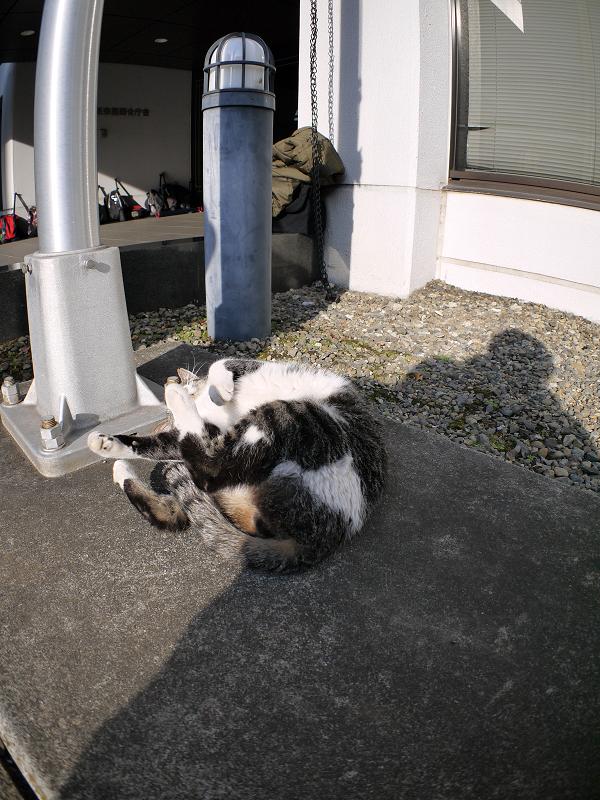 支柱で遊ぶキジ白猫3