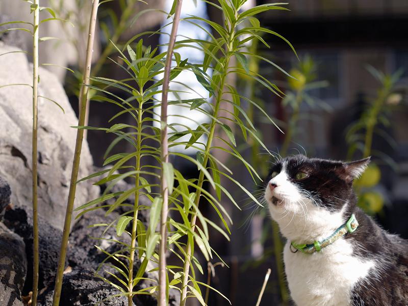 不機嫌な黒白猫2