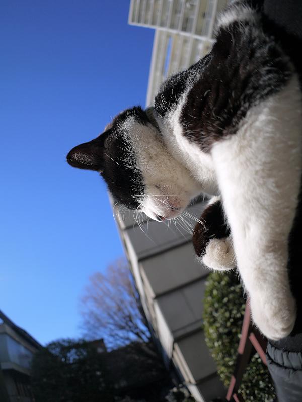 手だけを動かしてる黒白猫3